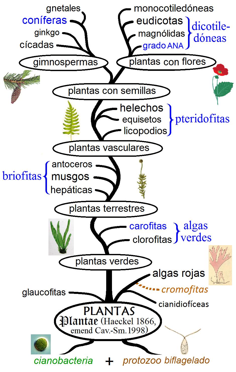 Various - Biologia Marina