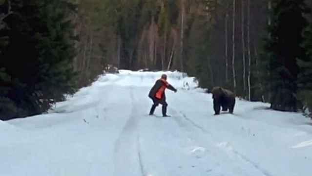 sueco oso