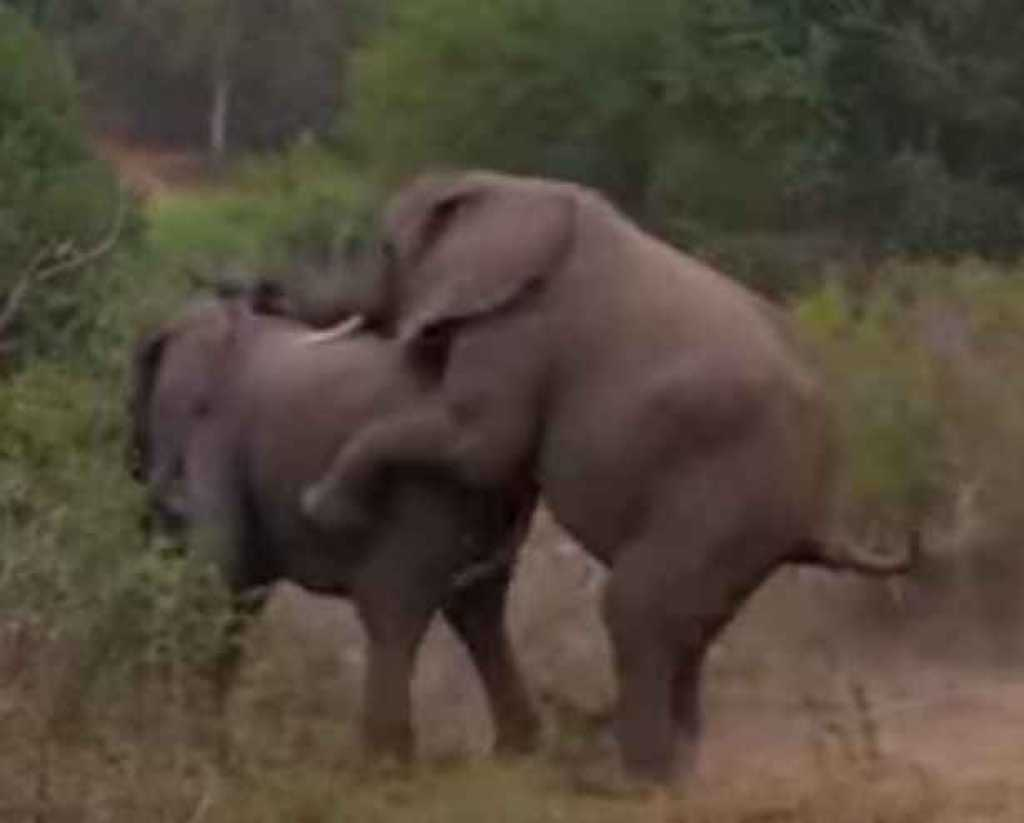 Video elephatsex — pic 3
