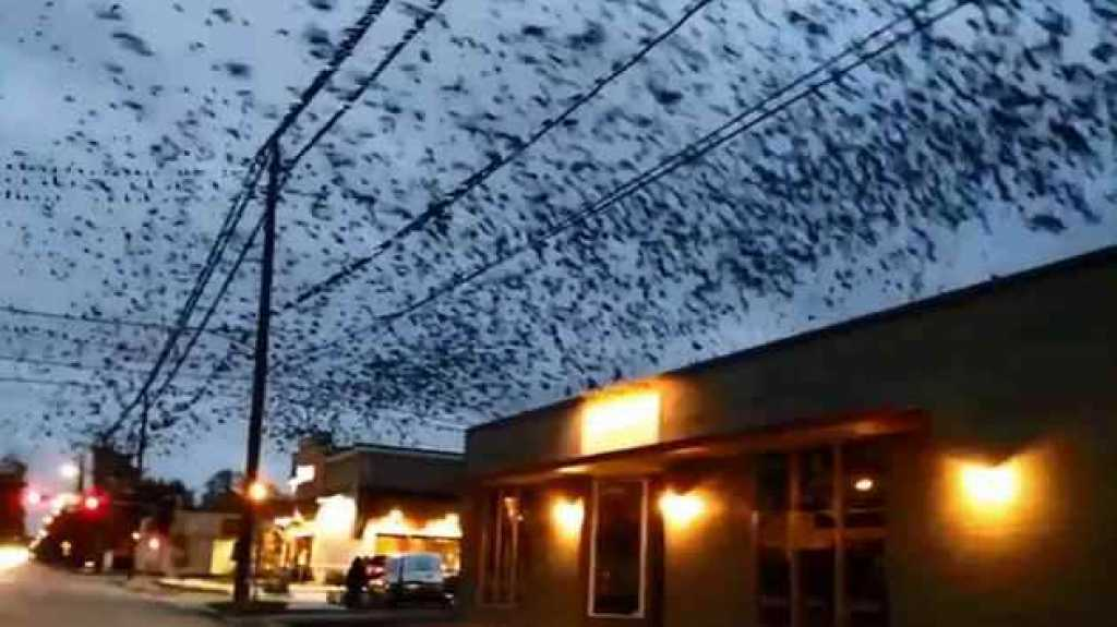 Enorme bandada de pájaros invade barrio de Houston