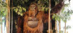 ¿Porqué se extinguió el verdadero King Kong?