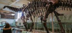 Conoce al Titanosaurio, el animal más grande que ha pisado la Tierra