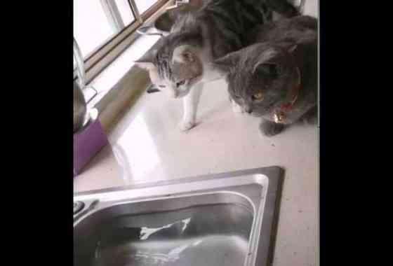 Estos gatos golosones se llevan un buen susto