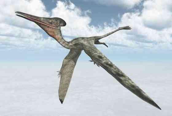 Los pterosaurios pudieron haber volado en cuanto nacían