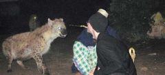 Las hienas en Etiopía comerán de tu boca