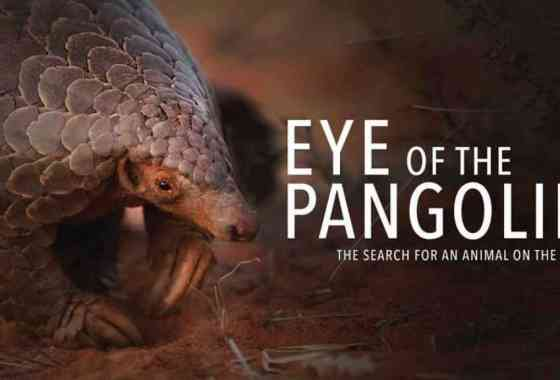 Pangolines en peligro: Eye of the Pangolin