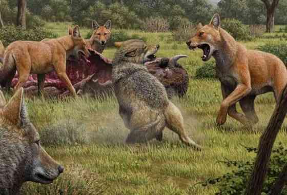 Revelados los secretos de los lobos terribles de Juego de Tronos