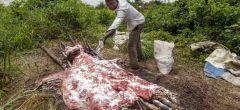 El comercio chino de pieles ha llevado a una masacre mundial de burros
