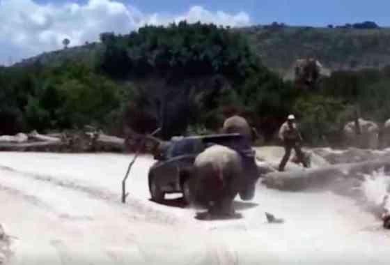 Rinoceronte carga y casi voltea un automóvil de turistas