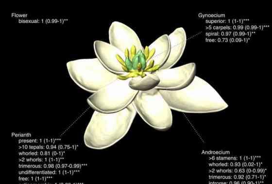Revelado: la madre (y el padre) de todas las flores