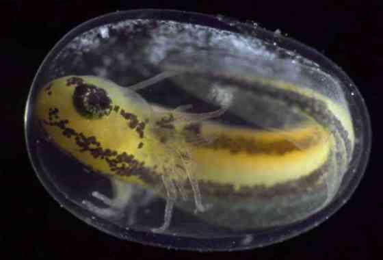 Así se convierte una simple célula en un organismo completo