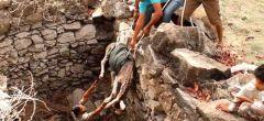 Rescate in-extremis de pequeño burrito en la India