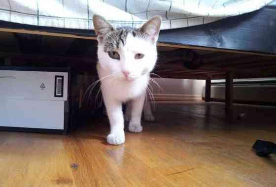 Investigadores adjuntaron cámaras a gatos al aire libre para filmar lo que hacen todo el día