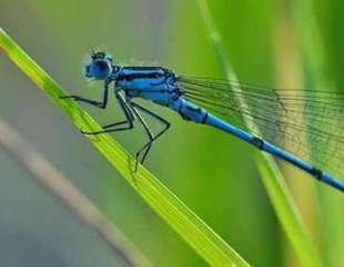 ¿Cómo obtuvieron sus alas los insectos?: los científicos (¡por fin!) cuentan la historia