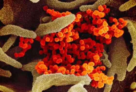 Científicos 'condenan enérgicamente' los rumores y las teorías de conspiración sobre el origen del brote de coronavirus
