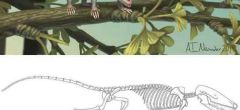 Dos nuevos mamíferos del Jurásico descubiertos en China