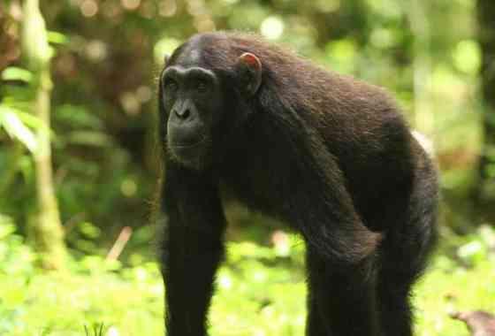 Buscando problemas: las agresiones y las incursiones territoriales valen la pena entre los primates