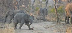Este elefante jugando al fútbol es lo más lindo que verás hoy