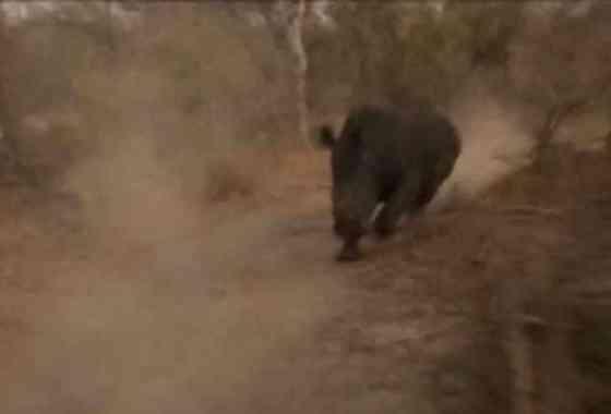 Terrorífico momento: rinoceronte carga contra un jeep de safari