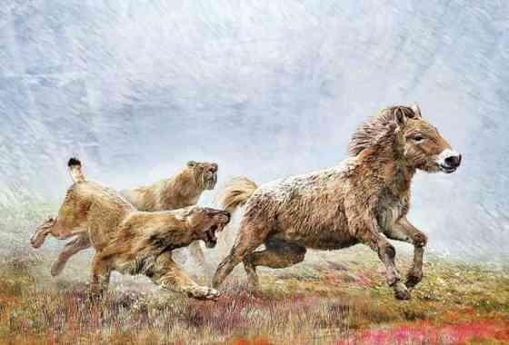 Un mortal cazador de largas distancias: un estudio de ADN revela conocimientos sobre el felino de dientes de sable