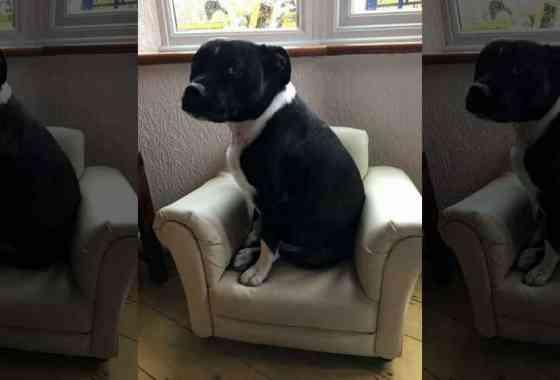 Este extraordinario perro puede ladrar hola