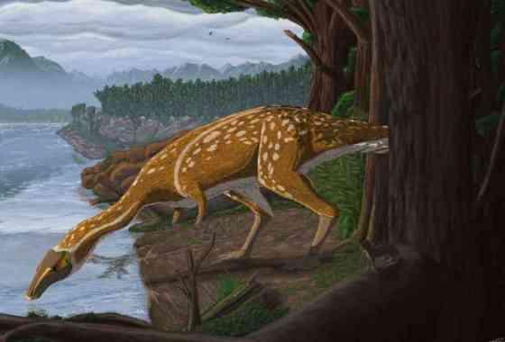 Descubren en Australia un elafrosaurio más joven que todos los demás