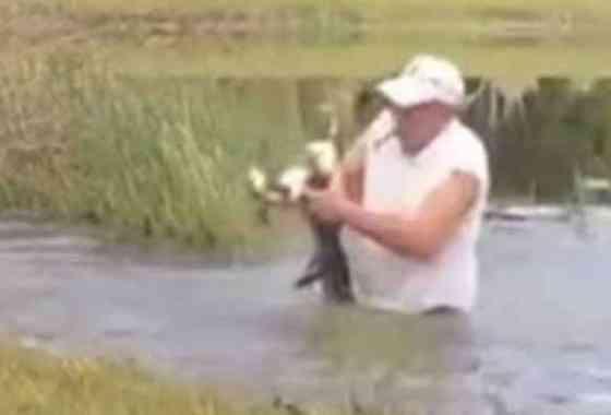 Hombre salva a un perrito de las fauces de un caimán