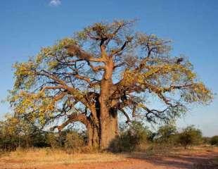 Genética del árbol de la vida