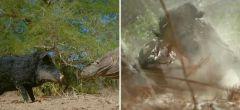 Cerdo robótico espía acaba destrozado por dragones de Komodo