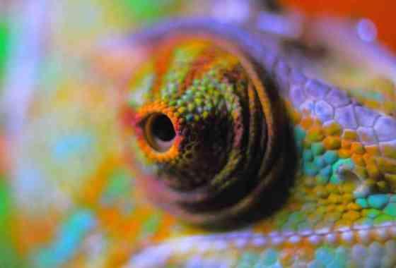 'Piel de camaleón' artificial que cambia de color y funciona con nanomáquinas