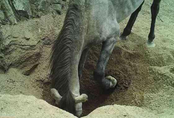 Los burros que cavan pozos ayudan a que la vida prospere en el desierto
