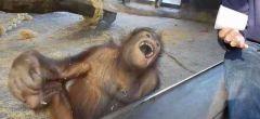 El mono y el truco de magia