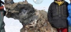 Quieren clonar un mamut encontrado en Rusia