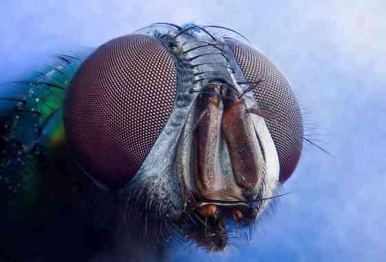 Los insectos se están extinguiendo a una velocidad alarmante