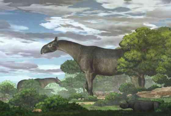 Este antiguo rinoceronte gigante pesaba como cuatro elefantes africanos
