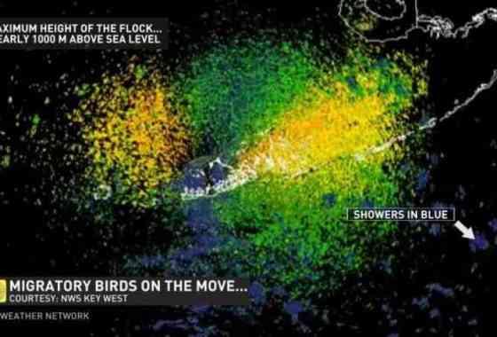 Esto es lo que se ve cuando una colosal migración de aves oscurece un radar de lluvia