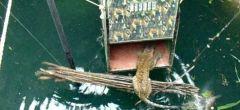 Aldeanos salvan a un leopardo de morir ahogado en un dramático rescate