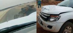 Hipopótamo carga contra un coche y le deja una 'impresión duradera'