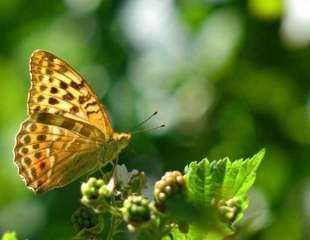 Estudio revela los secretos del vuelo de las mariposas