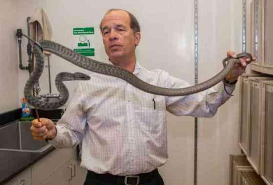 Serpientes forman 'lazos' para trepar en nuevos y sorprendentes vídeos