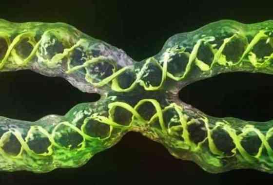 Por primera vez, científicos han secuenciado completamente un cromosoma humano