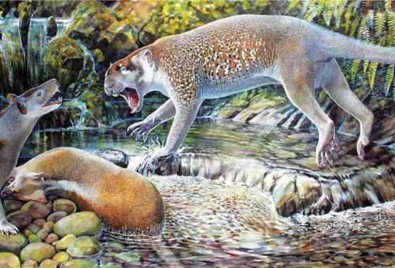 Nueva especie de león marsupial australiano desenterrado en el remoto Queensland