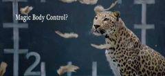 Jaguar se come a la gallina de Mercedes