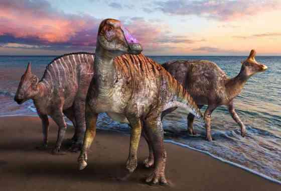 Nuevo dinosaurio pico de pato descubierto en Japón