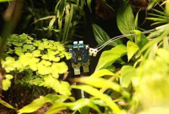 Planta se 'hace' la primera selfie del mundo botánico