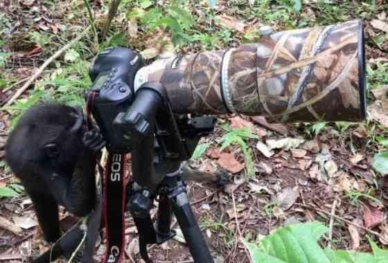 Curioso mono prueba la cámara de un fotógrafo