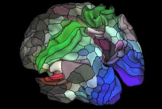 Mapa del cerebro humano en un detalle sin precedentes (vídeo)