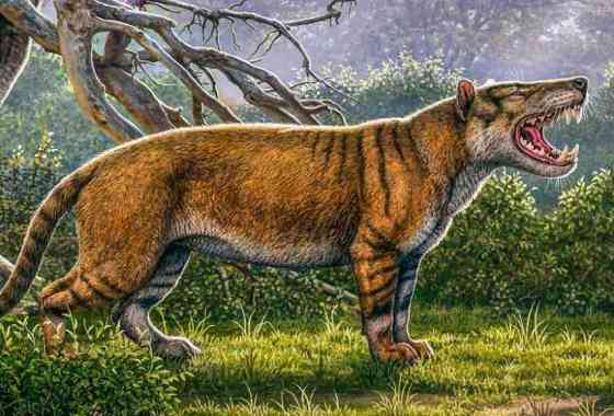 Gran depredador prehistórico encontrado en el cajón de un museo