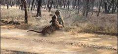 Tigresas luchan por el territorio en un estrepitoso enfrentamiento