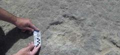 Hallazgo paleontológico inédito
